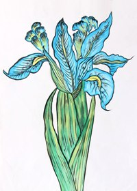 Florals in Water Colour Shading-3